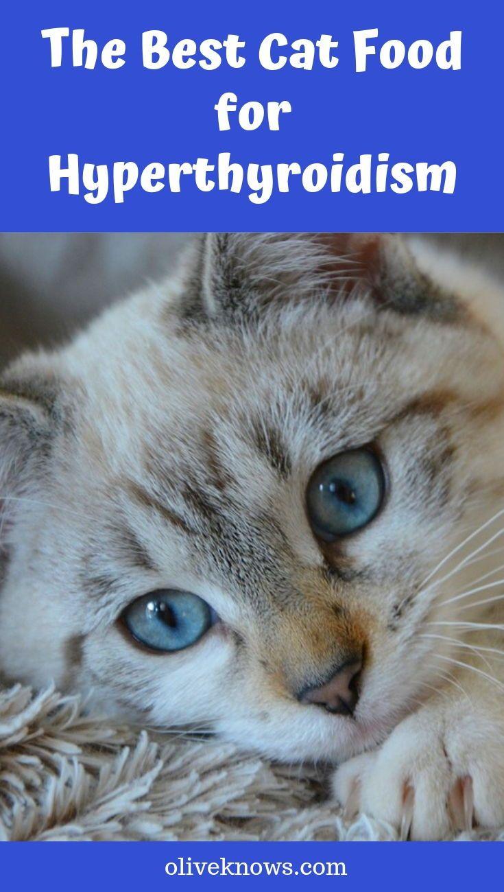 The Best Cat Food for Hyperthyroidism Best cat food, Cat