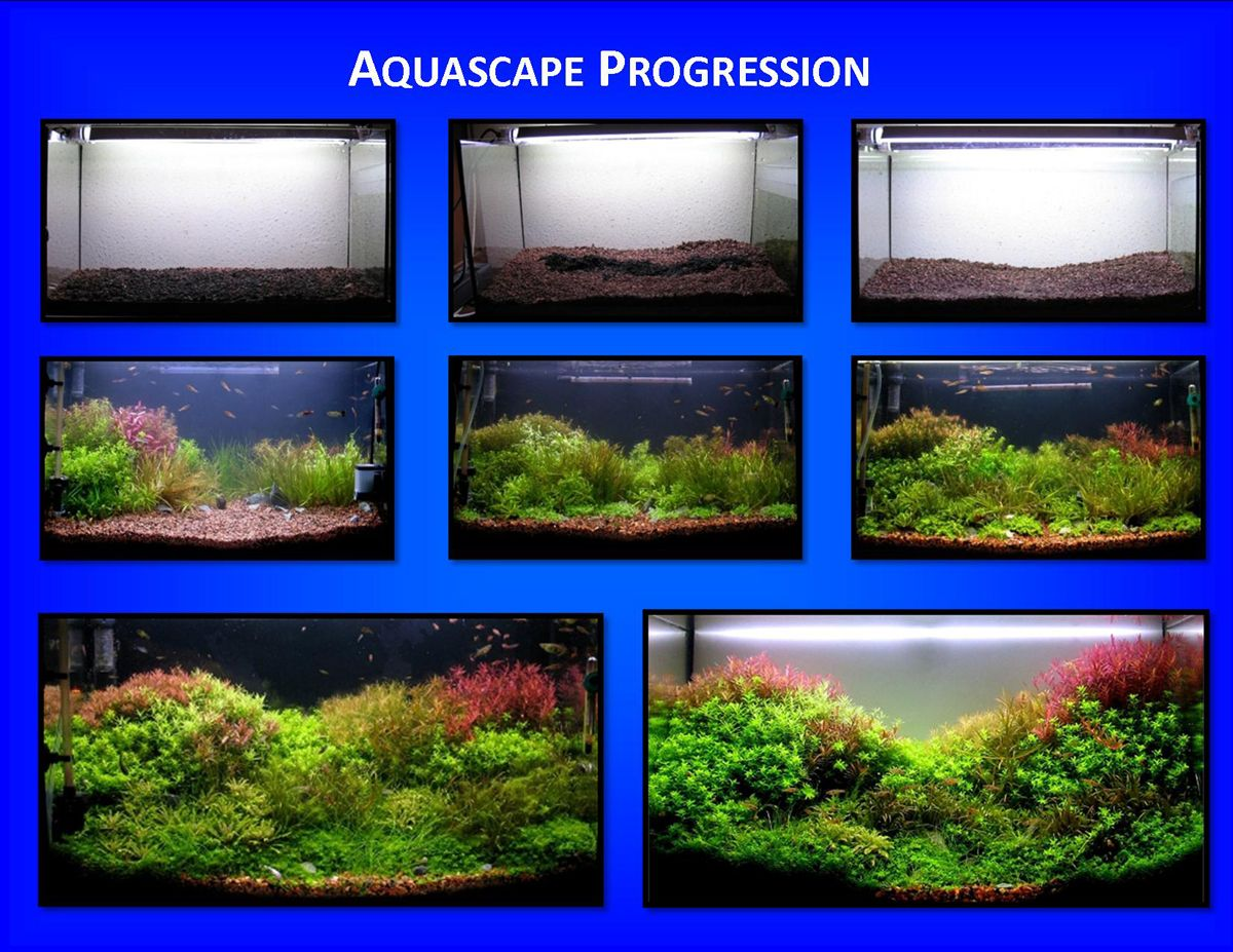 betta sorority tank - google search | aquariums | pinterest