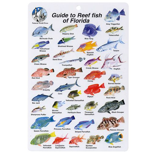 Top rated gear florida fish i d card florida fish and fish for What kind of fish do i have