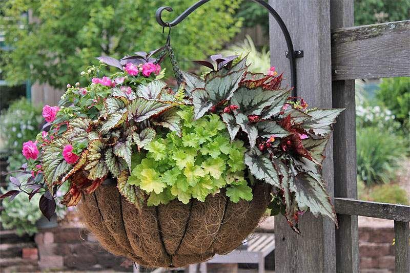 Como Combinar Plantas En Macetas Combinacion Plantas En Macetas Plantas En Maceta Jardineria En Macetas Y Cestas Colgantes