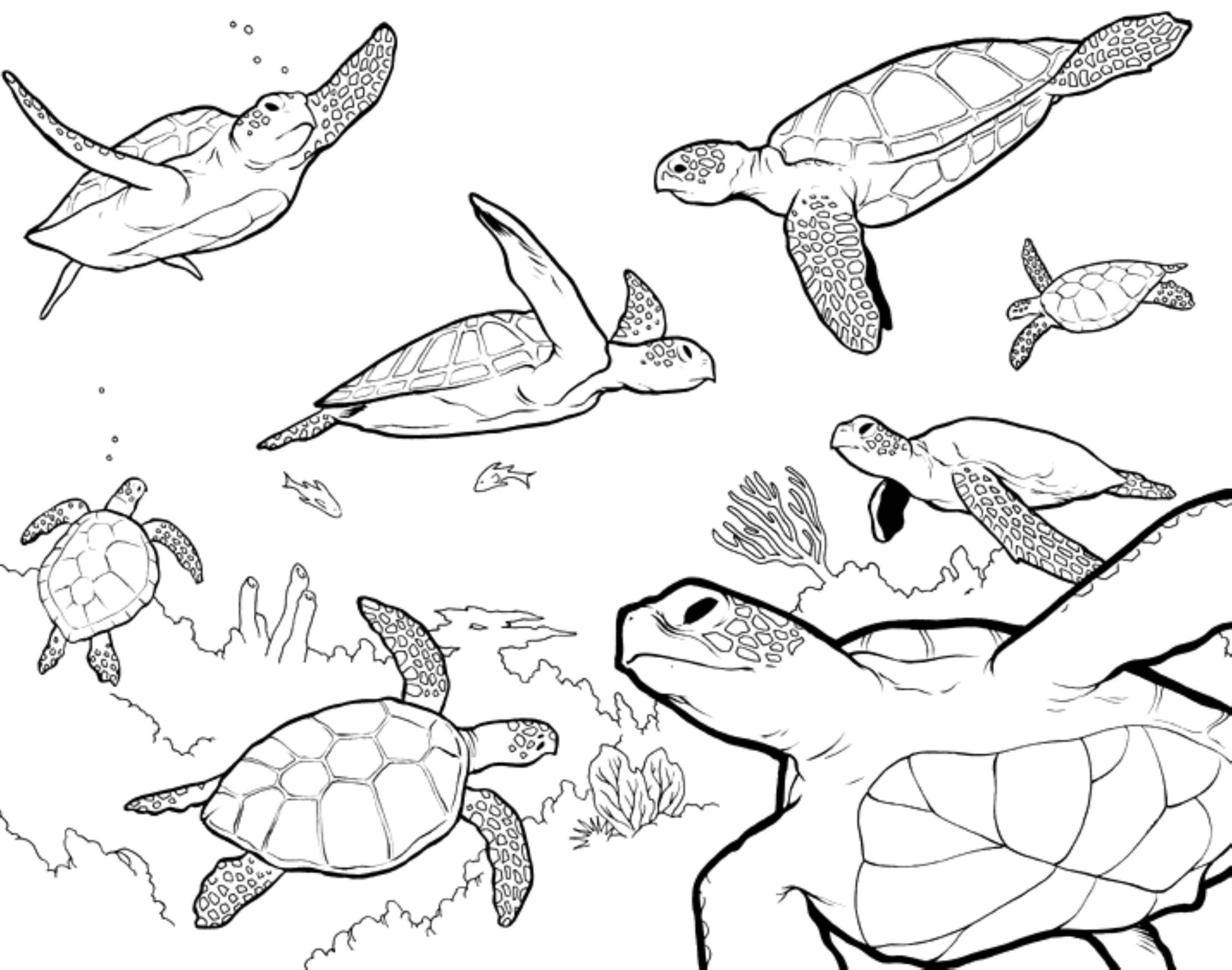 Sea Turtle Coloring Pages 2500x1969