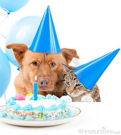 Dog And Cat Birthday Party With Cake With Images Animal