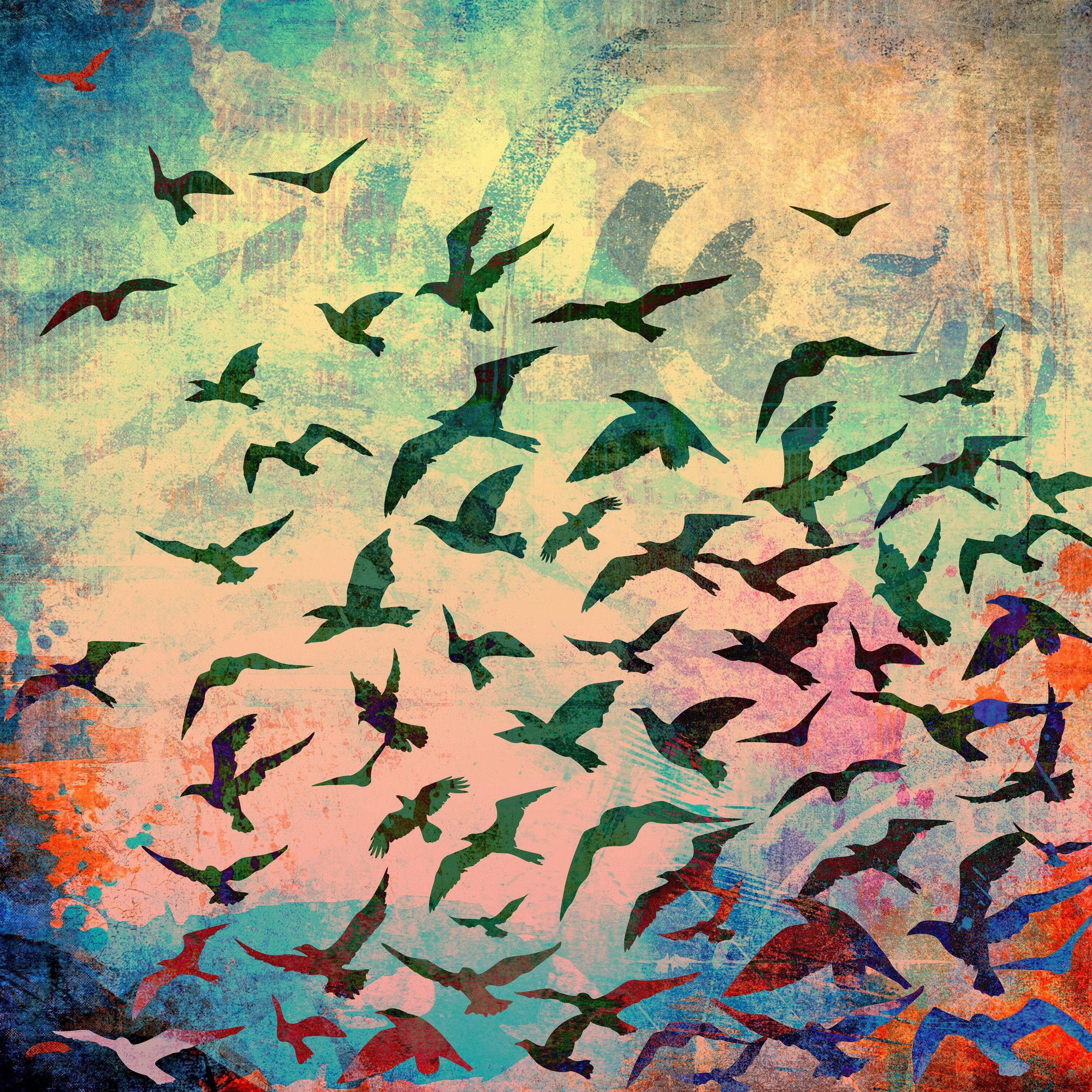 Flock of Seagulls Orange\' Graphic Art on Canvas | Graphic art and ...