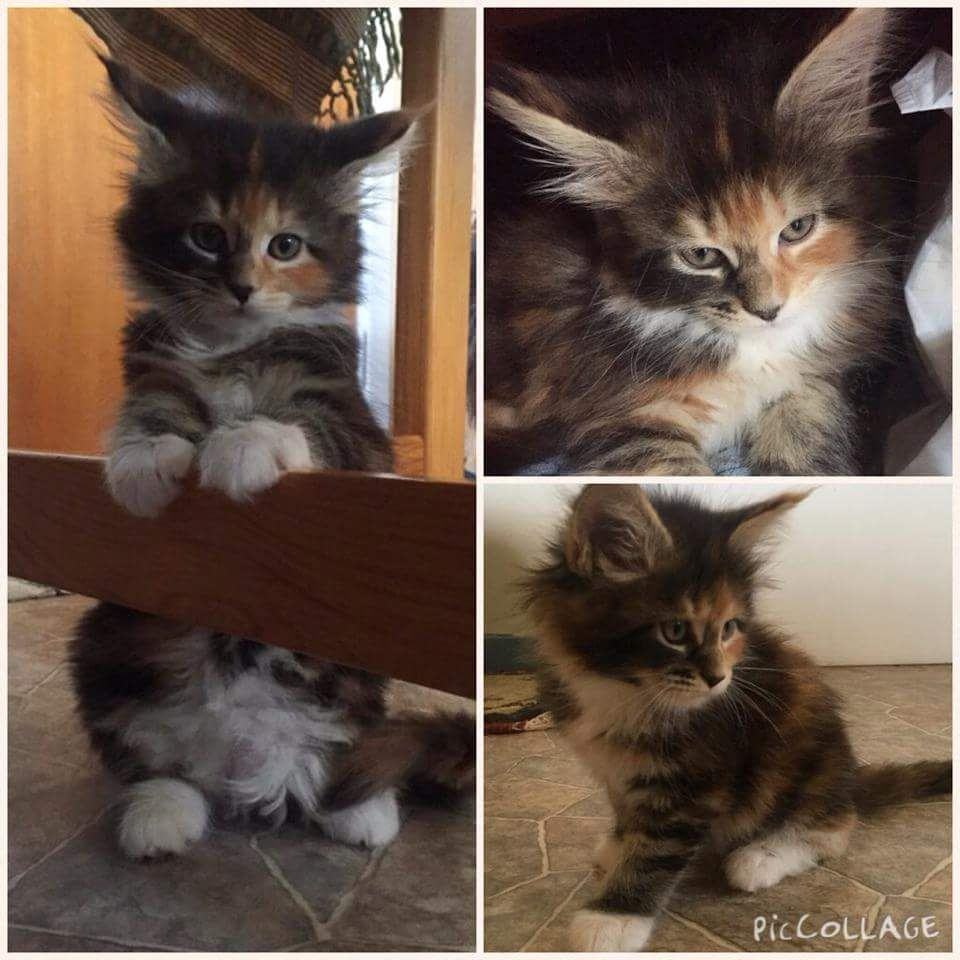 Found some old pictures of my cat that we took before we bought her
