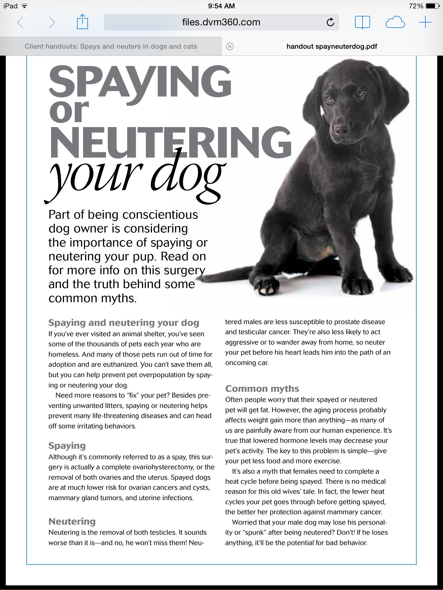 Spaying or Neutering your dog Animal hospital