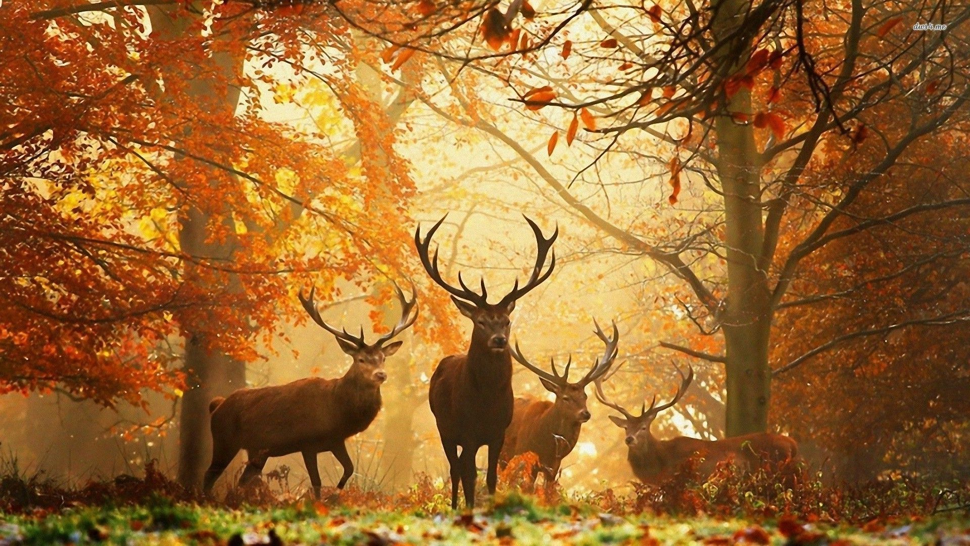 Deers In The Autumn Forest Hd Wallpaper Animal Wallpaper Autumn Forest Fall Wallpaper