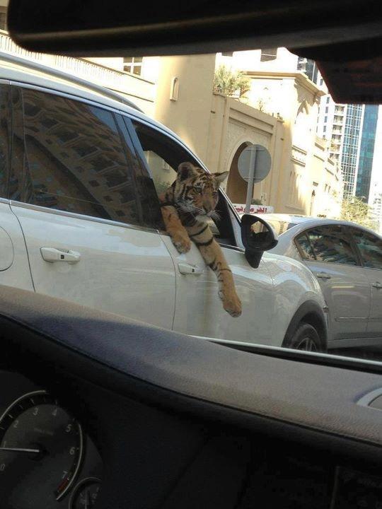 Acá, con el tiger