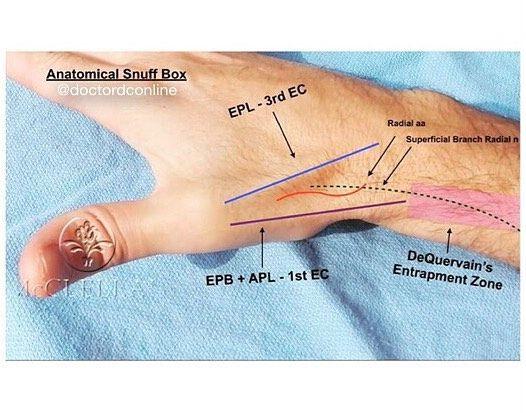 Imagini pentru anatomical tabatiere | Anatomie | Pinterest | Searching