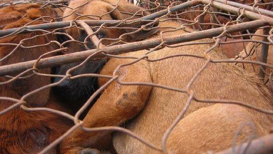 Boycott 2014 Asian Games in Incheon, South Korea - It's time to end the appalling Dog Meat Trade!  잔인한 악습, 개식용은 이젠그만!
