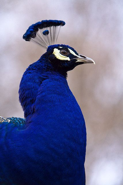 4fade5cb I think this is true ROYAL BLUE!!! One of God's most beautiful gifts to us
