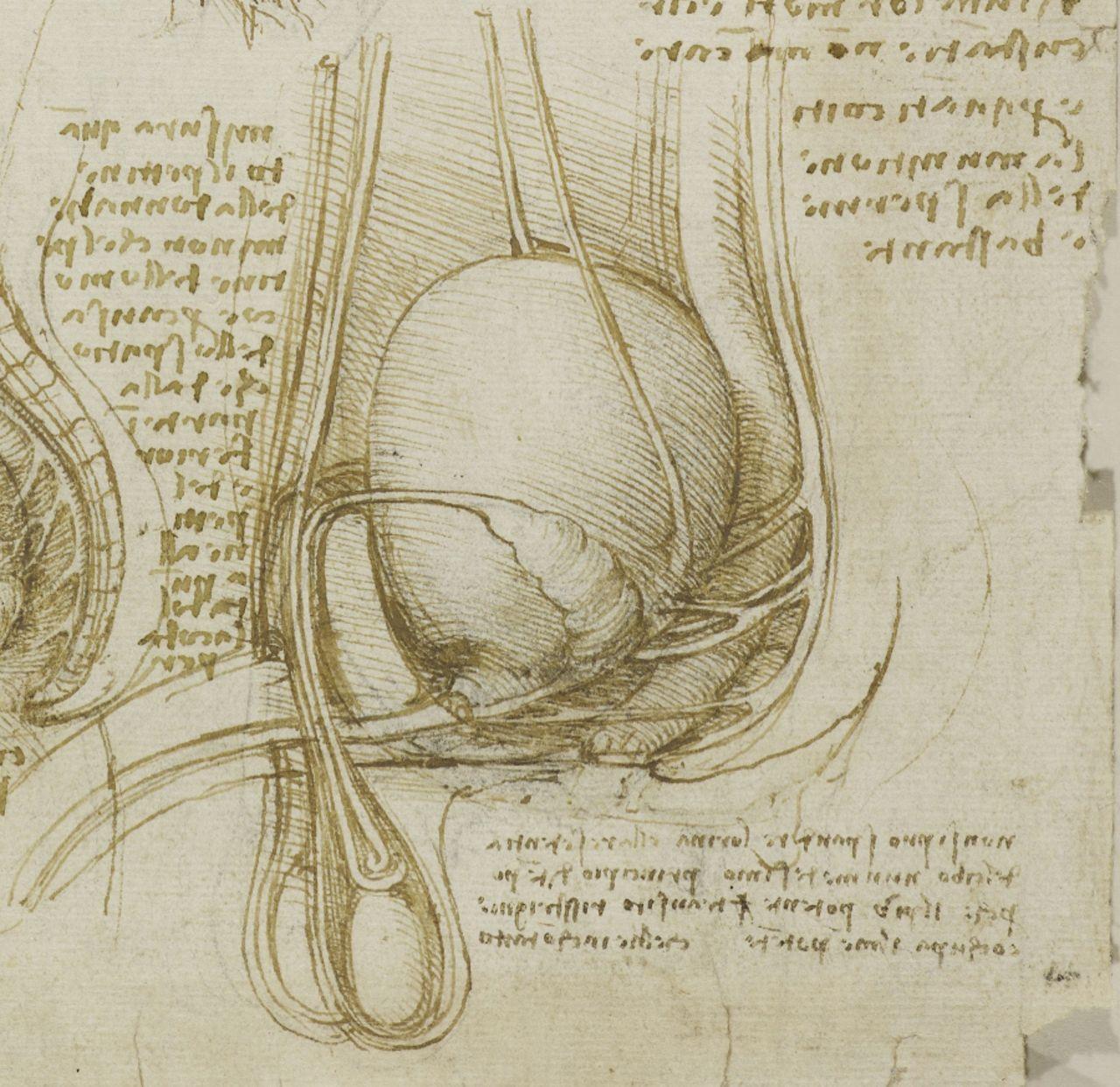 Leonardo da Vinci, 1452-1519, Italian, Anatomical Drawing of the ...