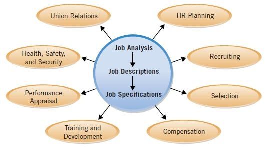 Job Analysis And Hr Activities  What Is Human Resource   Job