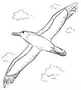 How To Draw An Albatross Drawing Tutorial Drawing Tutorial Free Printable Coloring Pages Coloring Pages