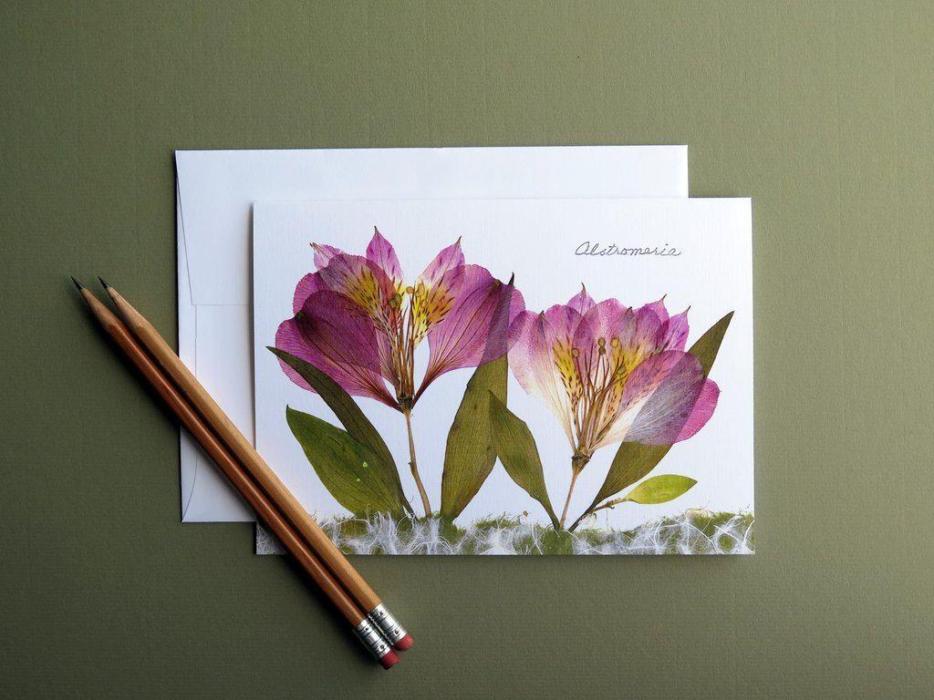 Alstromeria Pressed Flower Card Botanical Bright Flowers Greeting