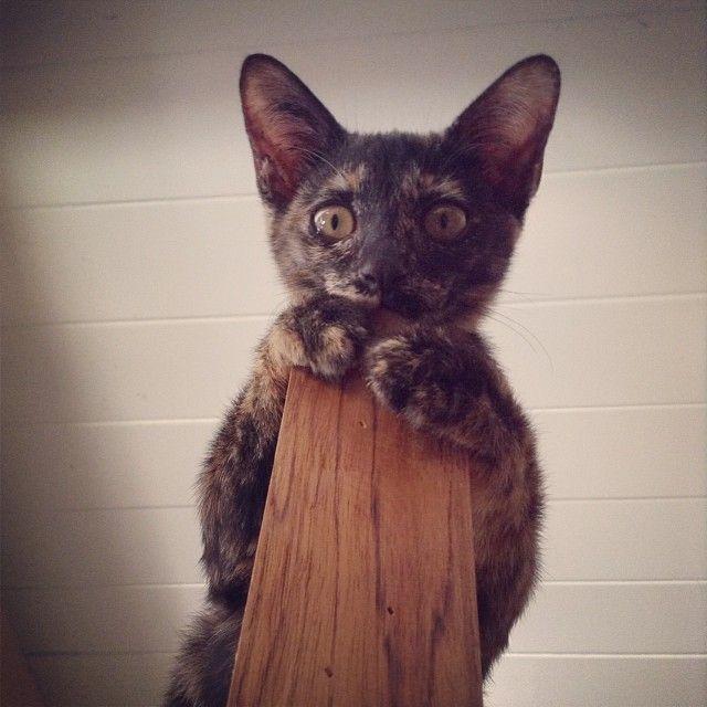 #scared #cat ? | Cute cats, Cats