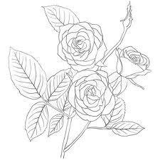 simple rose bush stem drawing google search inspiring ideas in