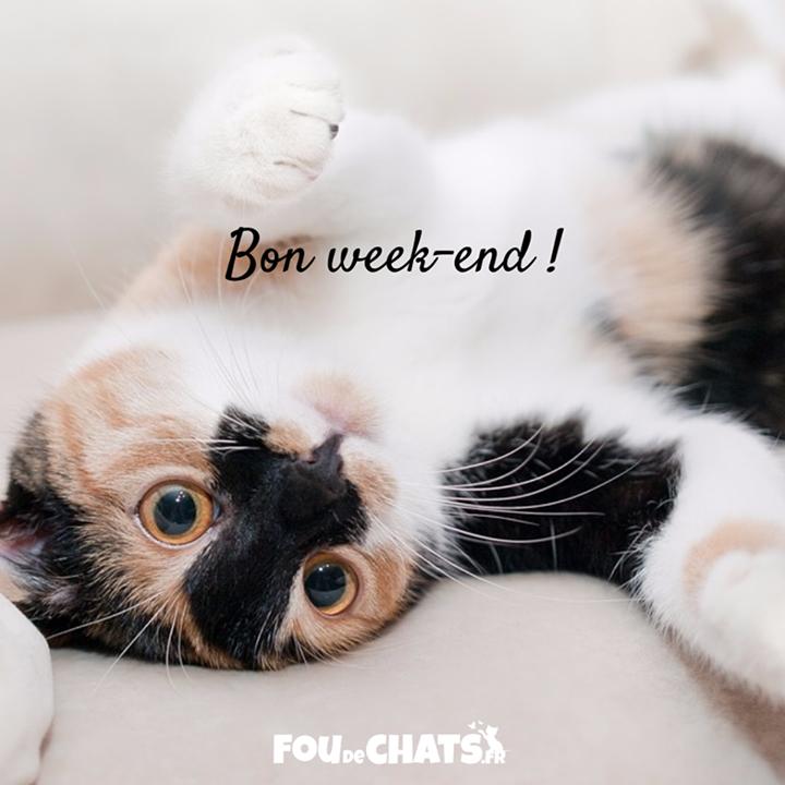 Bon week end tous chat chats foudechats amoureuxdeschats jaimeleschats bonweekend - Bon week end a tous ...