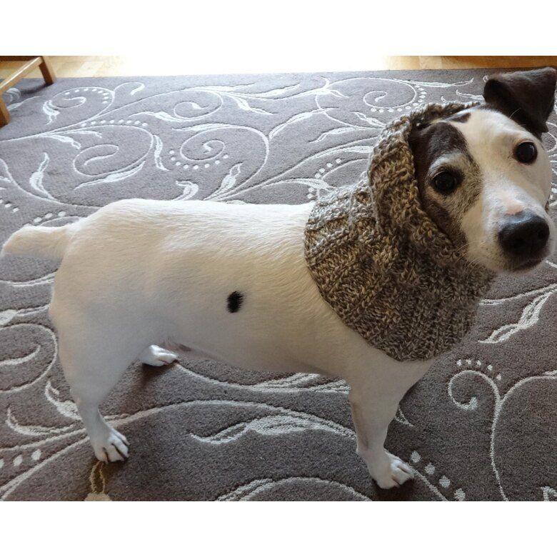  Dog neck snood Dog collar Dog winter snood  Dog snood