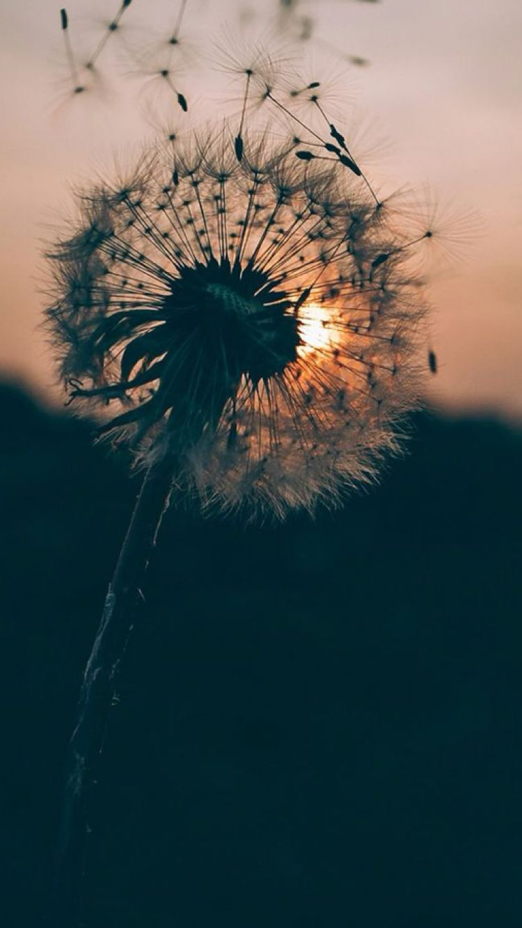 Photography Iphone Aesthetic Tumblr Hd Wallpapers In 2020 Hipster Wallpaper Dandelion Wallpaper 7 Plus Wallpaper