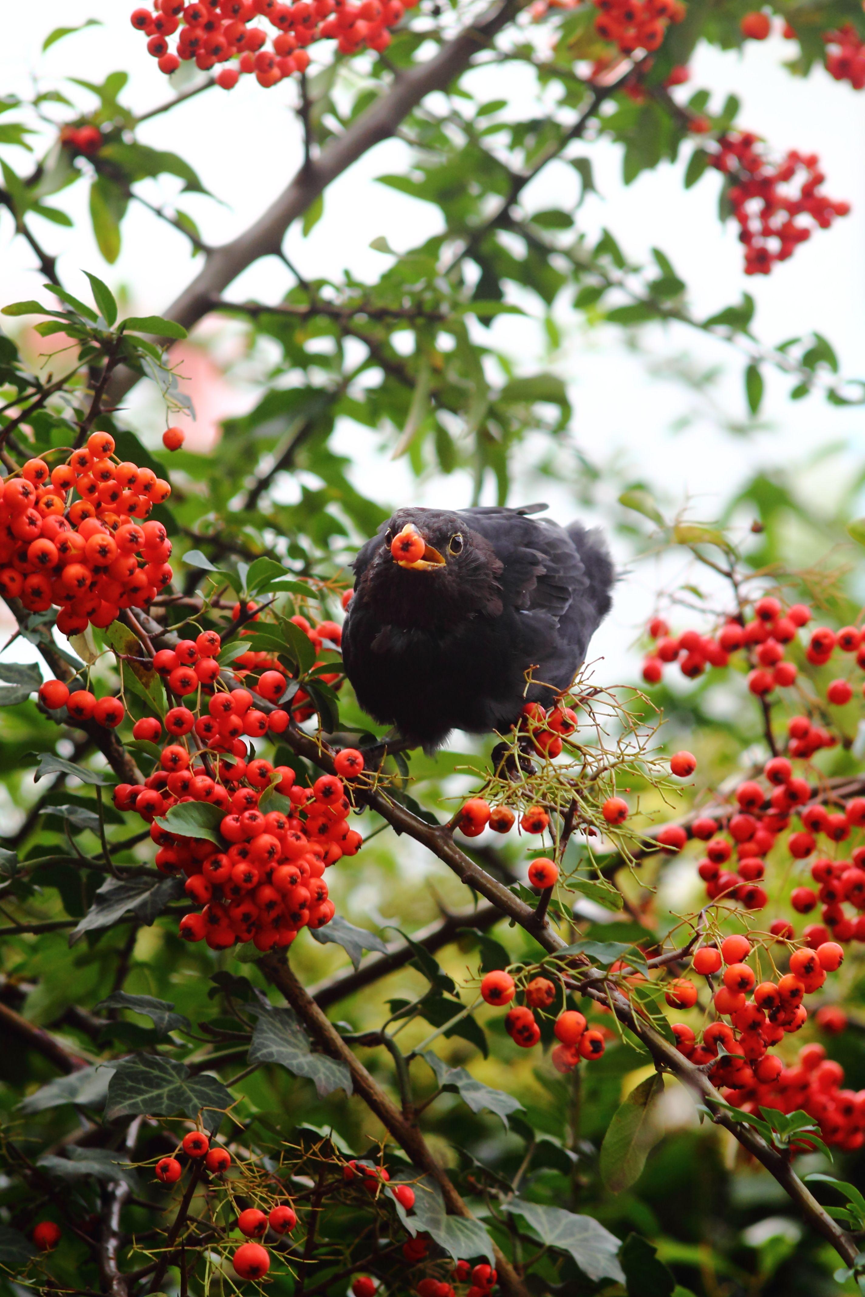 heimische sträucher für vögel und insekten