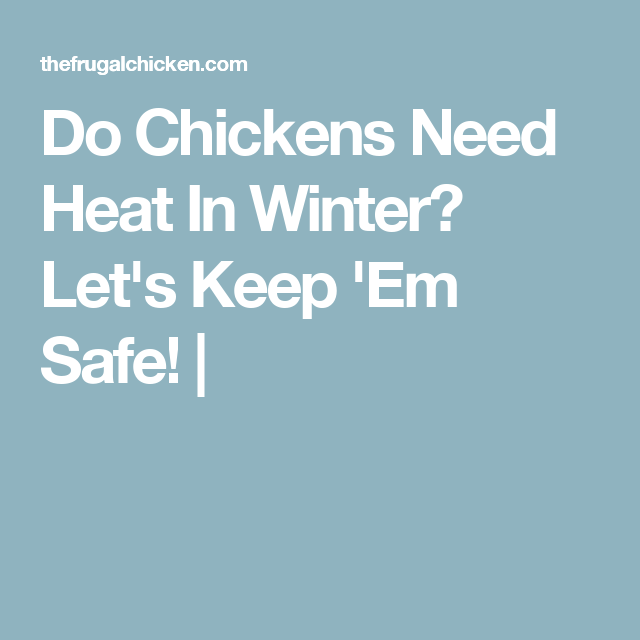 Do Chickens Need Heat In Winter? Let's Keep 'Em Safe