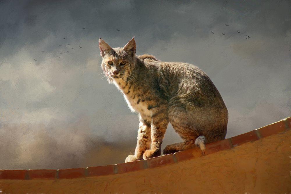 Bobcat II, Tucson, Arizona Animal parade, Urban icon