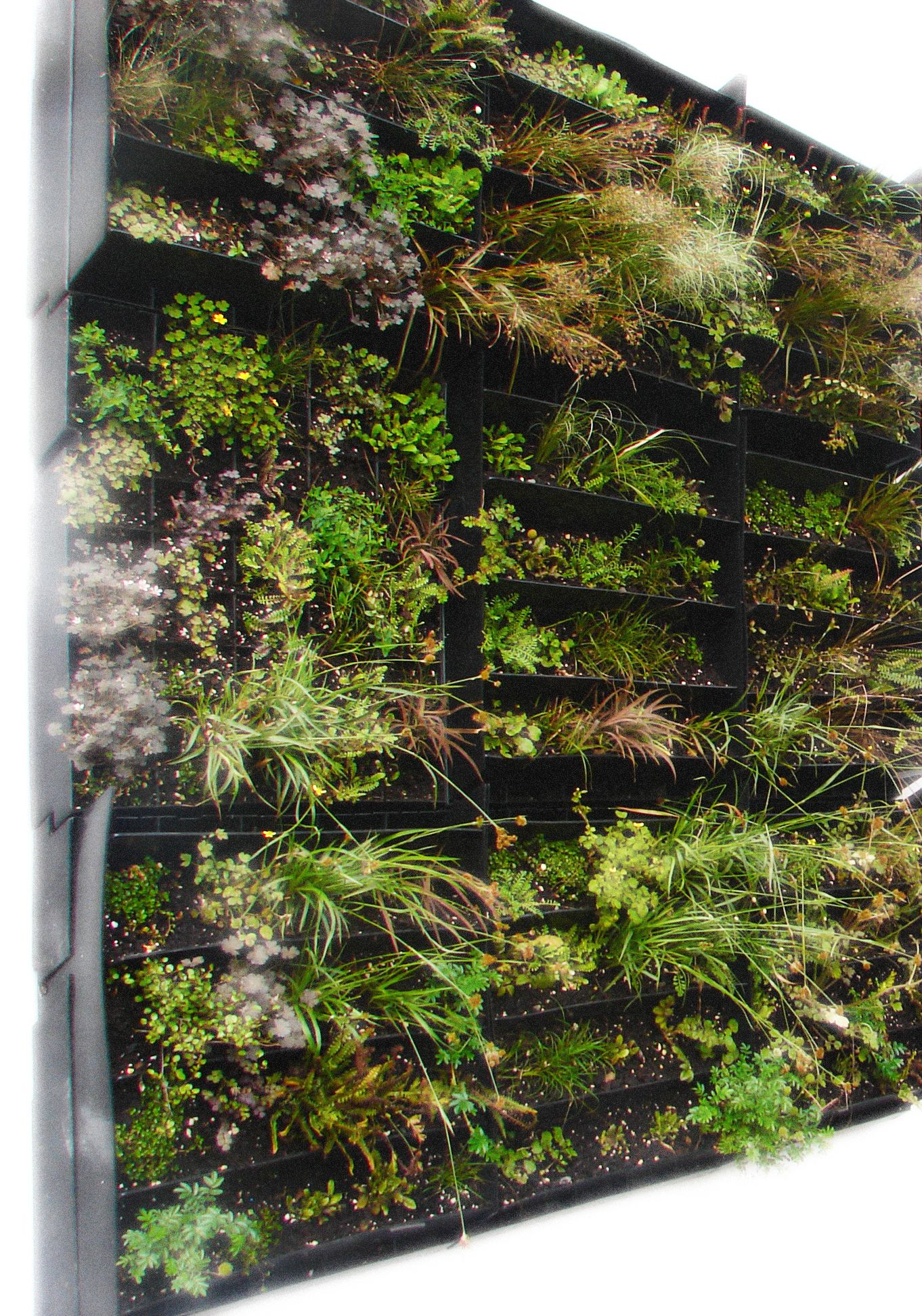 The Living Wall Next The Landscape Architecture Building Check Out