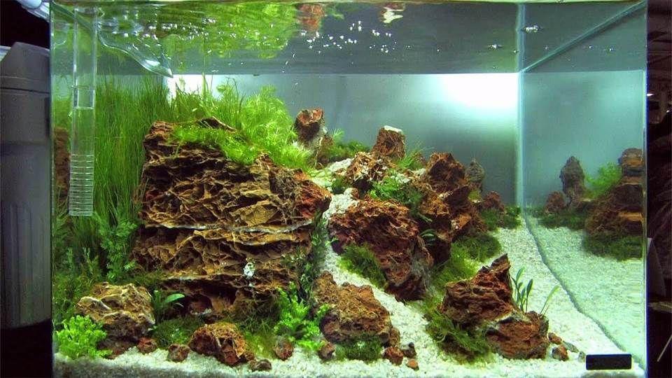 21 Best Aquascaping Design Ideas To Decor Your Aquarium Tips Inside Homelovers Planted Aquarium Aquascape Tropical Fish Tanks