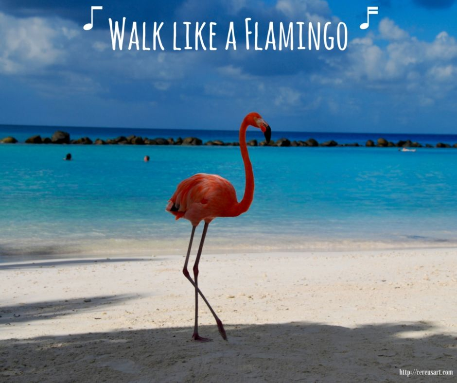 Walk Like a Flamingo! (med bilder)