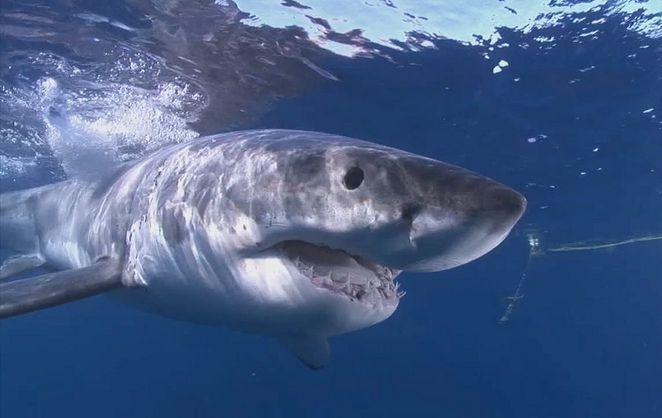Sharks tweet their presence at Western Australia beaches