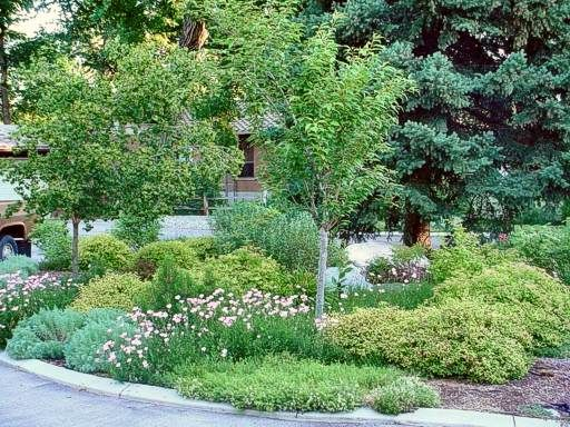Drought Tolerant Landscaping I Want A Look Like This On Street Corner With Pines Front House Landscaping Lawn And Landscape Front Yard Landscaping Design