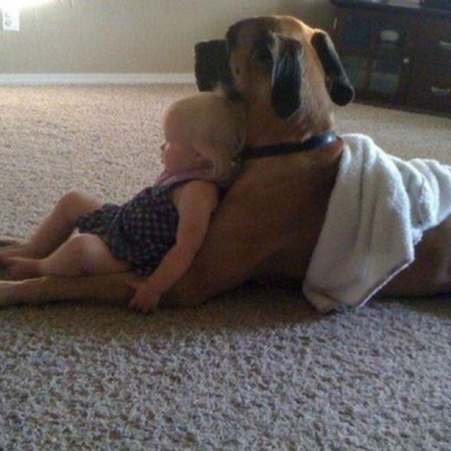 Possibly The Cutest Thing I Have Ever Seen I Love Dogs Dogs