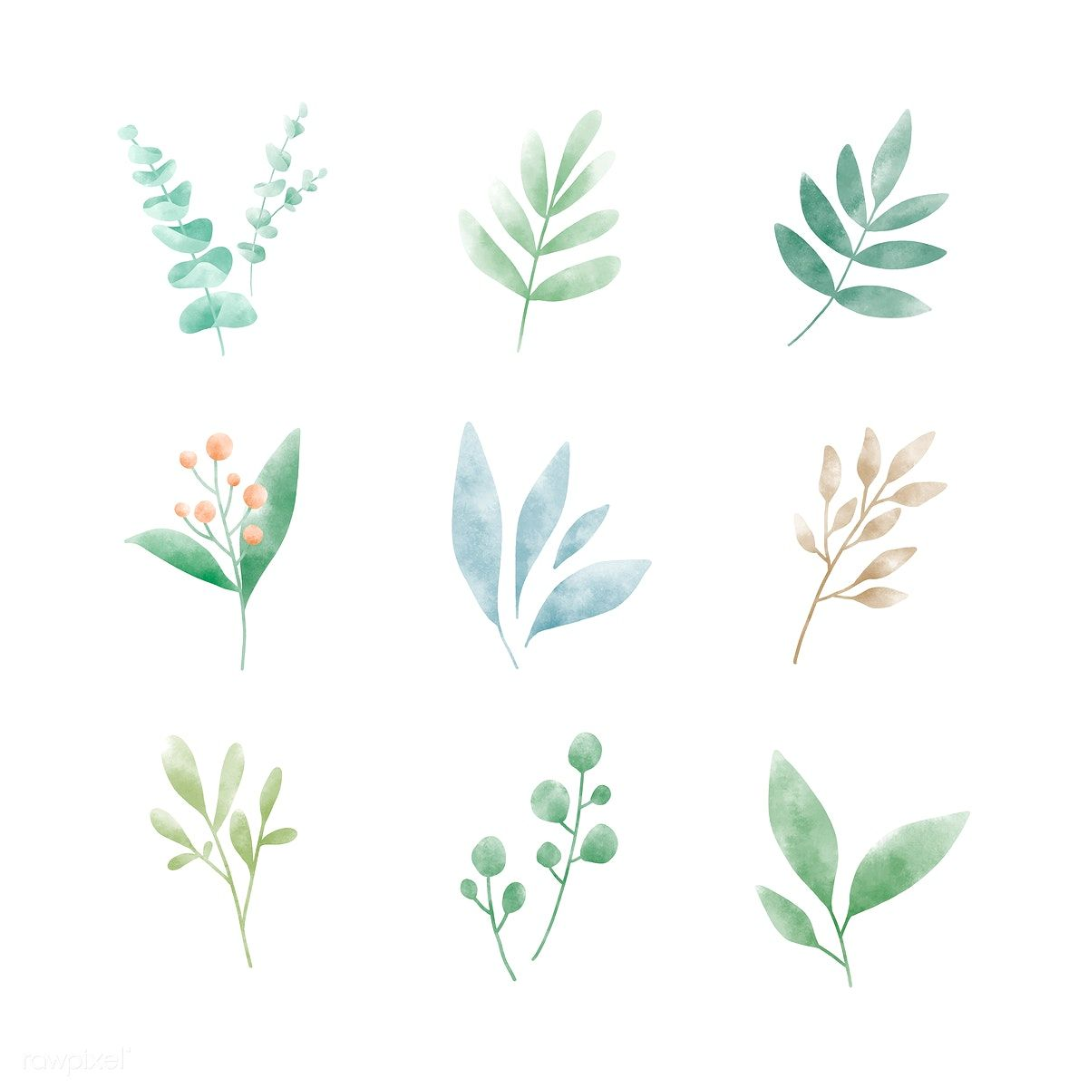 Download Premium Illustration Of Set Of Watercolor Leaves Vectors