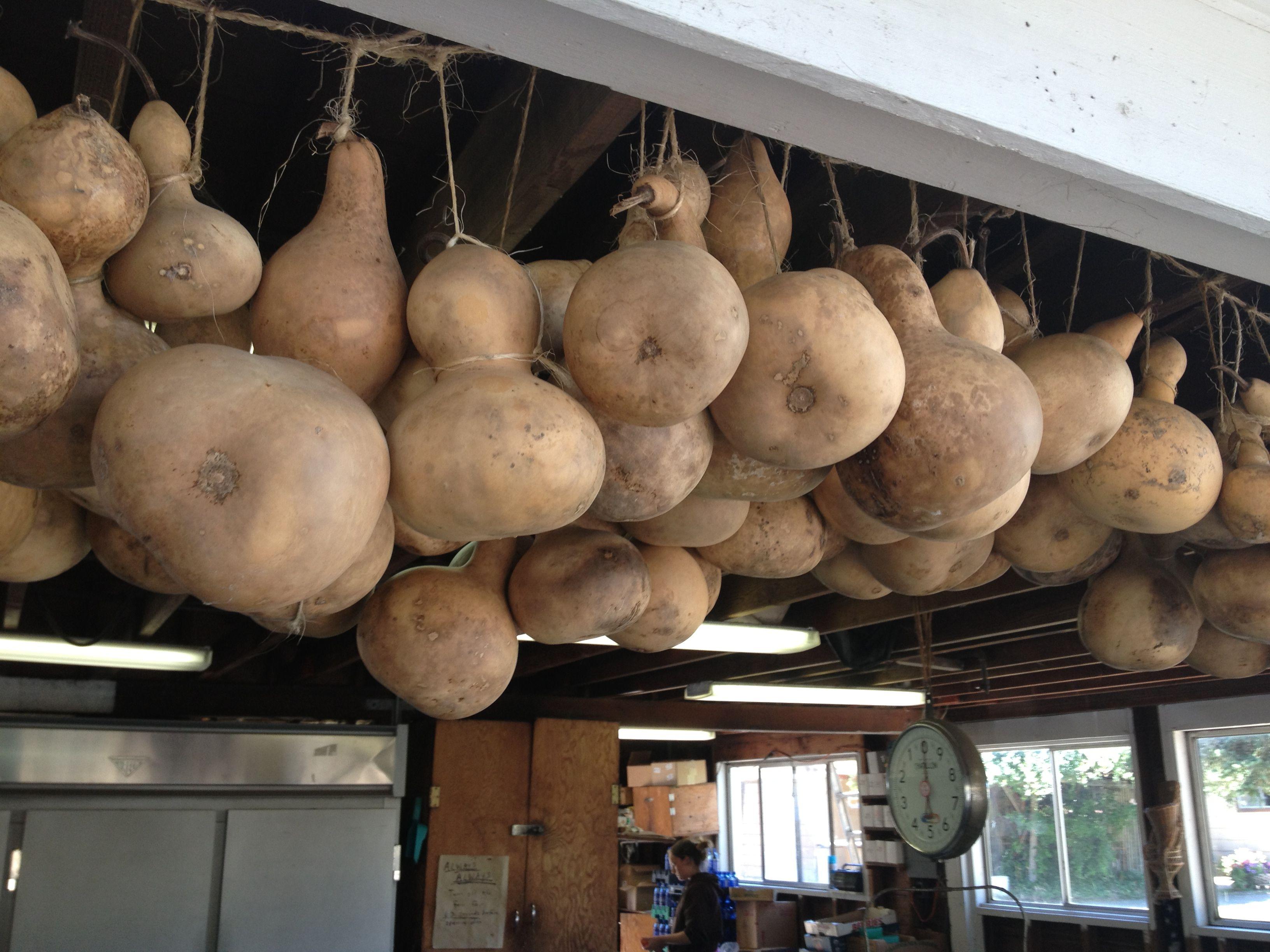 Gourds for sale gourds pinterest gourds primitives