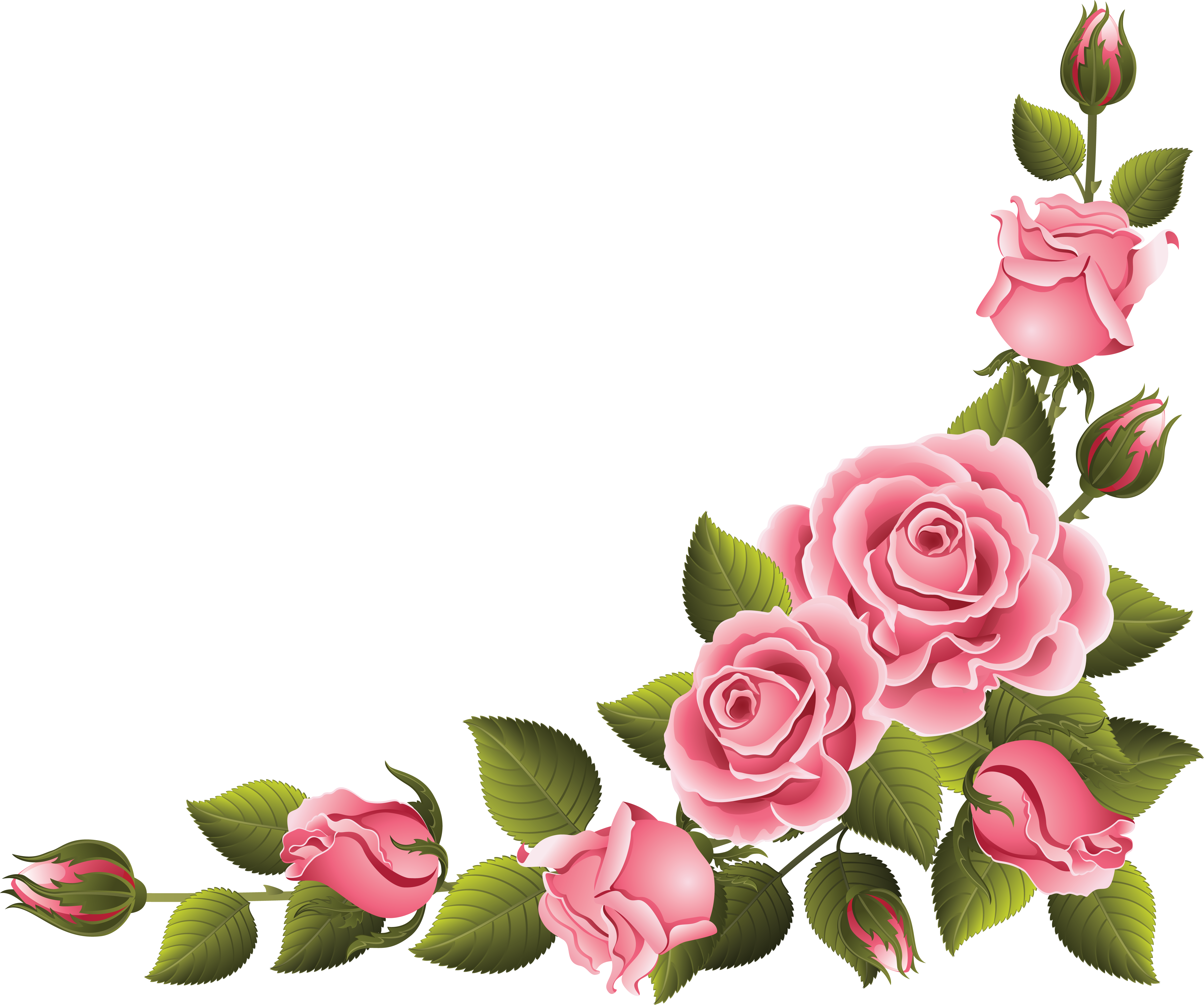 pinkbrightrose274.png (4785×3993) Цветочное искусство