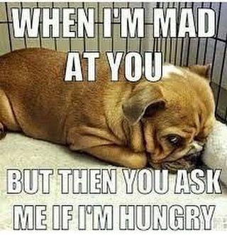 3ca454ac5f0b01b9bd5c4834ad4f3809 works every time memes memesdaily meme dogs
