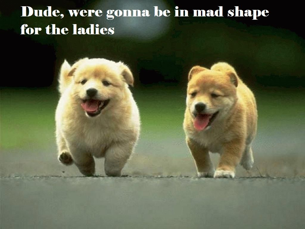 Funny Puppies follow me please my goal is 100 000 followers