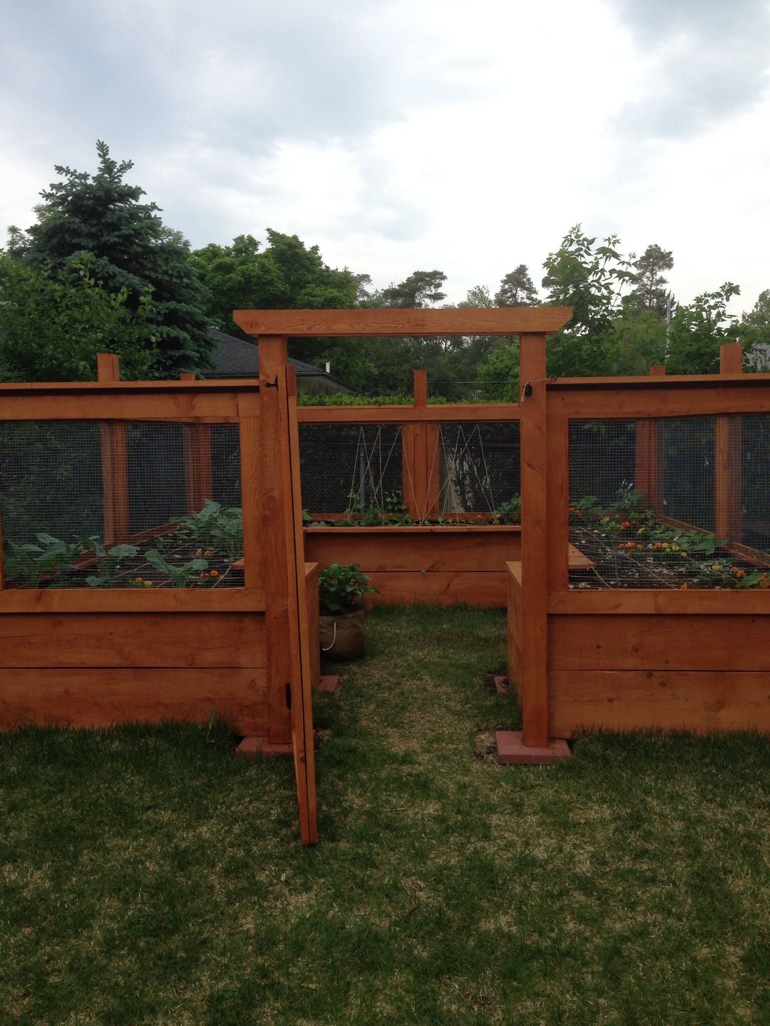 Central NY raised bed garden...deer, rabbit and groundhog-proof ...