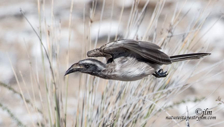 Just After Take Off !!!!! by Judylynn Malloch - Photo 169631131 - 500px