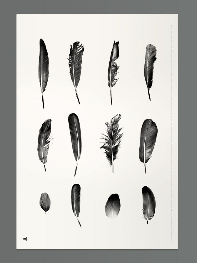 Feathers - Thomas Fethers
