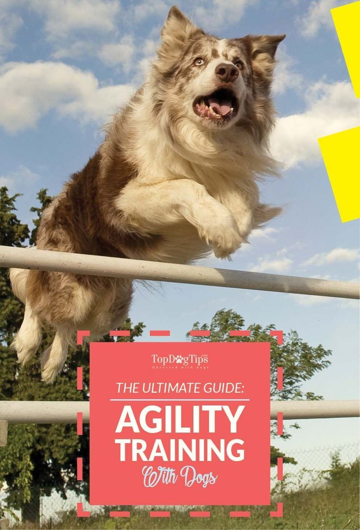 Agility Training for Dogs: The Ultimate Beginners Guide