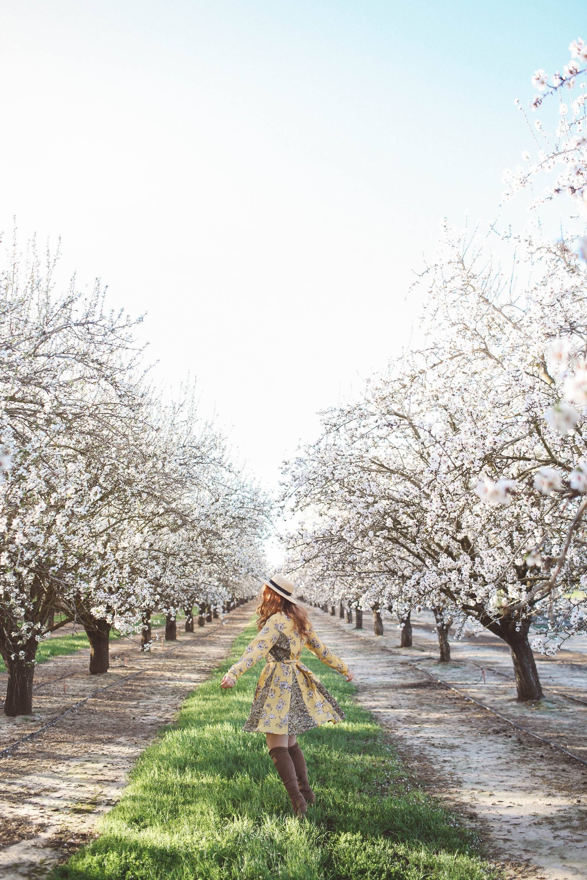 Best Almond Blossoms In California In 2021 California Flowers Almond Blossom Blossom Tree Wedding