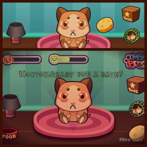 "My pets. Hamster NokTok*  ""Ready for a bath? '^ #bestoftheday#photooftheday#like#edit#pic#foto#snap#photo#shot#screen#screenshot#wall#wallpaper#background#app#google#play"