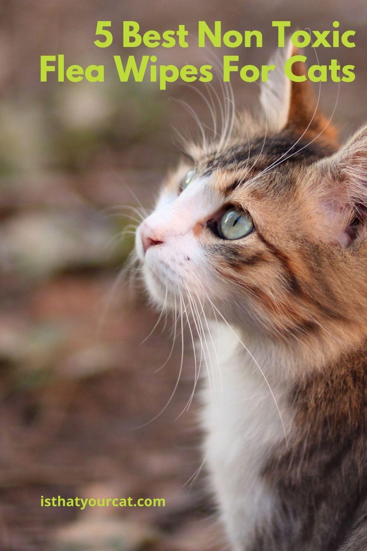 5 Best Non Toxic Flea Wipes For Cats In 2020 Fleas Cats Cat Has Fleas