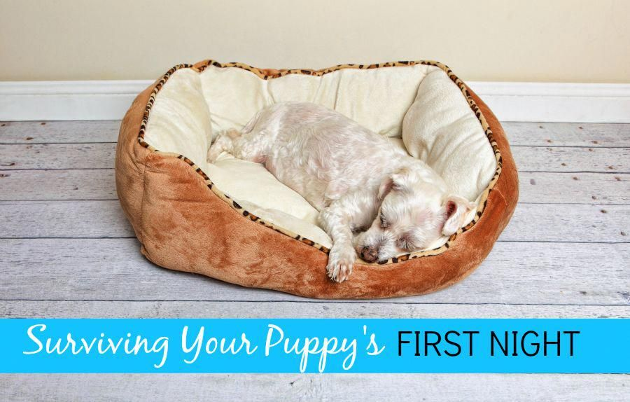 The first night with your puppy is both amazing and