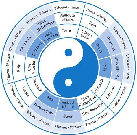 Circuit Energetique Ce Flux Energetique Eleve Revient Ensuite Au Meridien Et A L Organe Suivant De Nouveau Pour Medecine Chinoise Medecine Energetique Chinoise