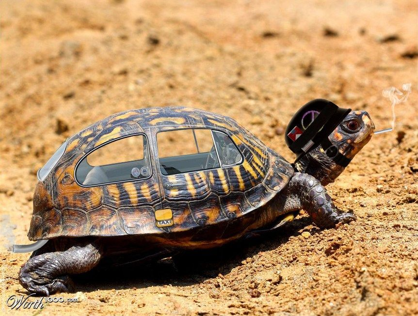 Photoshop Submission for 'Chop A Turtle' Contest | Tortue, Tortue drôle, Animaux