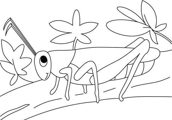 Pin On Grasshopper Coloring Pages