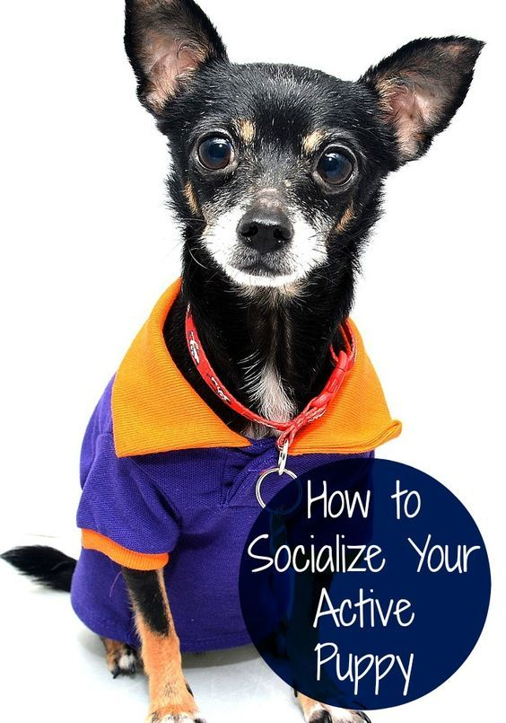 5 Easy Ways To Socialize Your New Pup Puppies Dog Training Dog