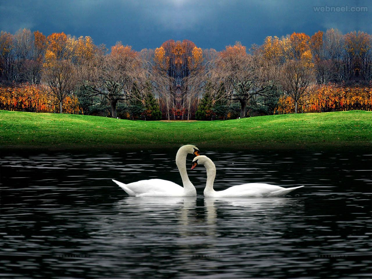 Wall Paper valentine day wallpaper 1 | swans | pinterest | wallpaper